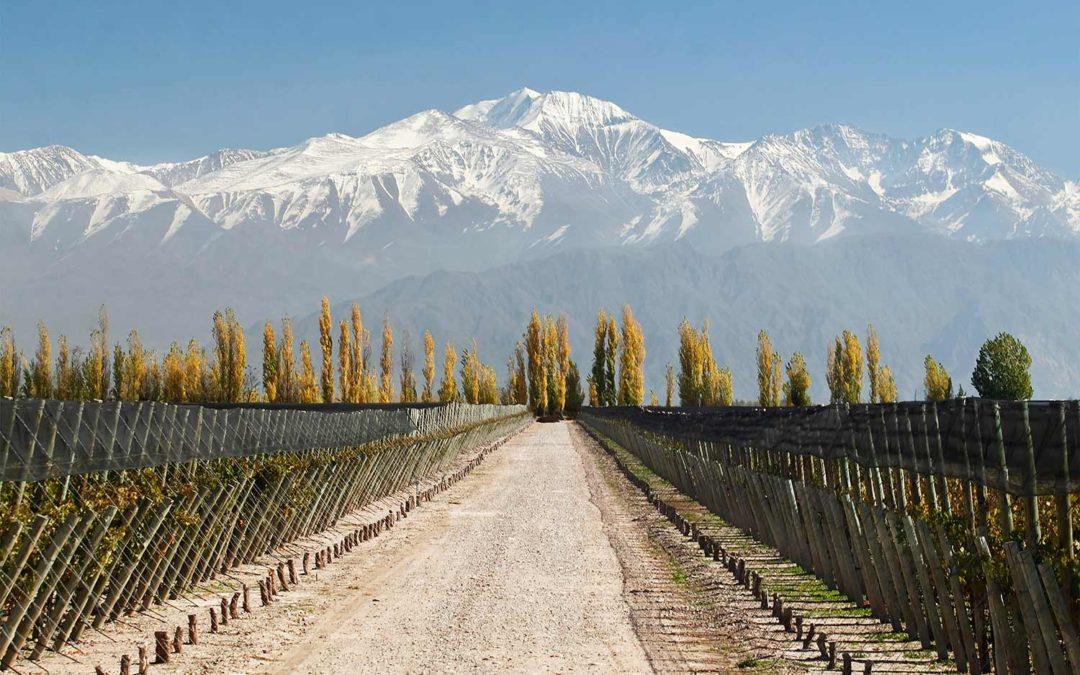 Druvor odlade på hög höjd i Anderna ger mersmak