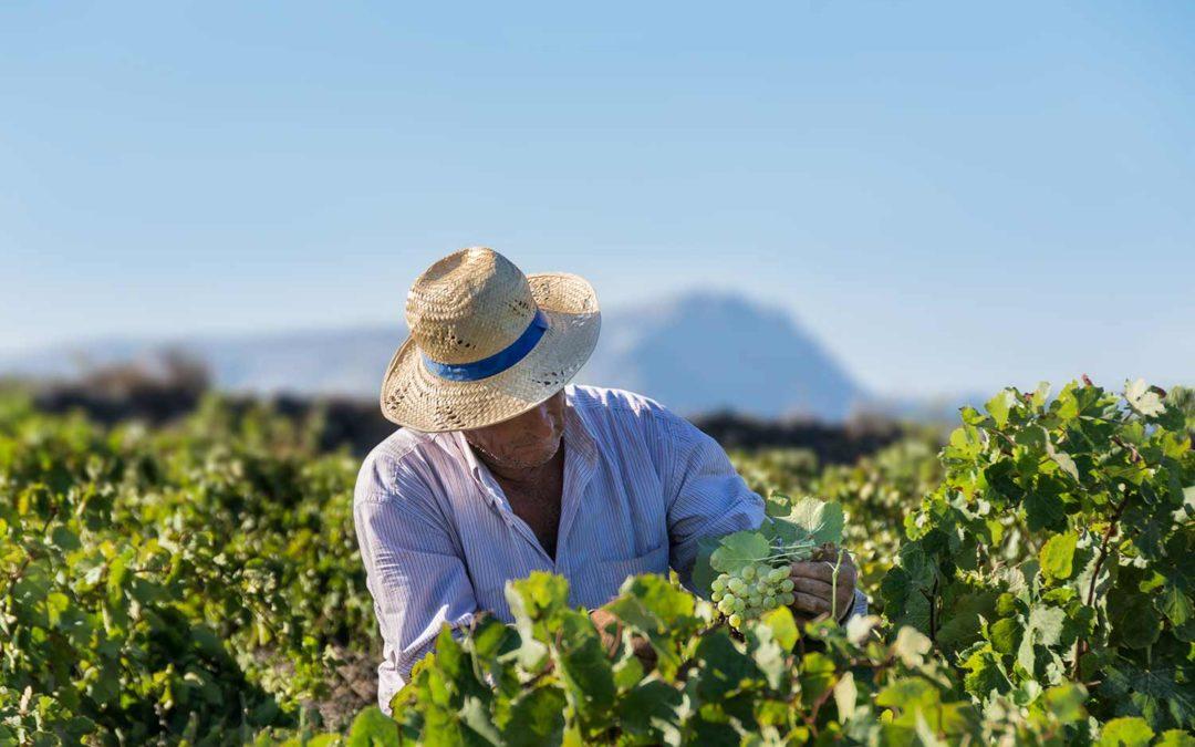 Greklands viner – så mycket mer än Retsina