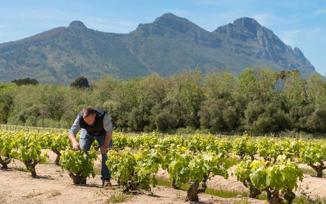 Abrie Beeslaar – världens främste vinmakare