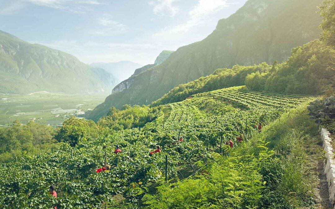 Mousserande bergsvin från Italien